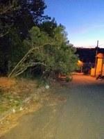 Indicação pede a realização de limpeza e poda das árvores da Rua Rubens Rezende, no Bairro Santa Tereza