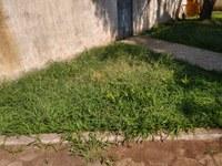 Indicação pede limpeza e poda da grama no jardim do pátio do Terminal Rodoviário Tancredo Neves.