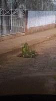 Indicação pede o desentupimento, em caráter de urgência, dos bueiros nas seguintes localidades Rua Dr. Brandão altura da oficina João Nani e Rua Dr. Cesarino até a praça São Sebastião