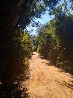 Indicação solicita a roçagem das margens e poda das árvores das estradas rurais do Campo Redondo e da Lagoa