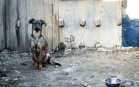 Indicação solicita disponibilizar com a participação da vigilância sanitária e os grupos de apoio aos animais, um local para abrigar os animais de rua