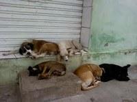 Requerimento -  Informar sobre a possibilidade de disponibilizar, com a participação dos grupos de apoio aos animais, um local com estrutura para abrigar os animais de rua que estão carentes de atendimento e doentes